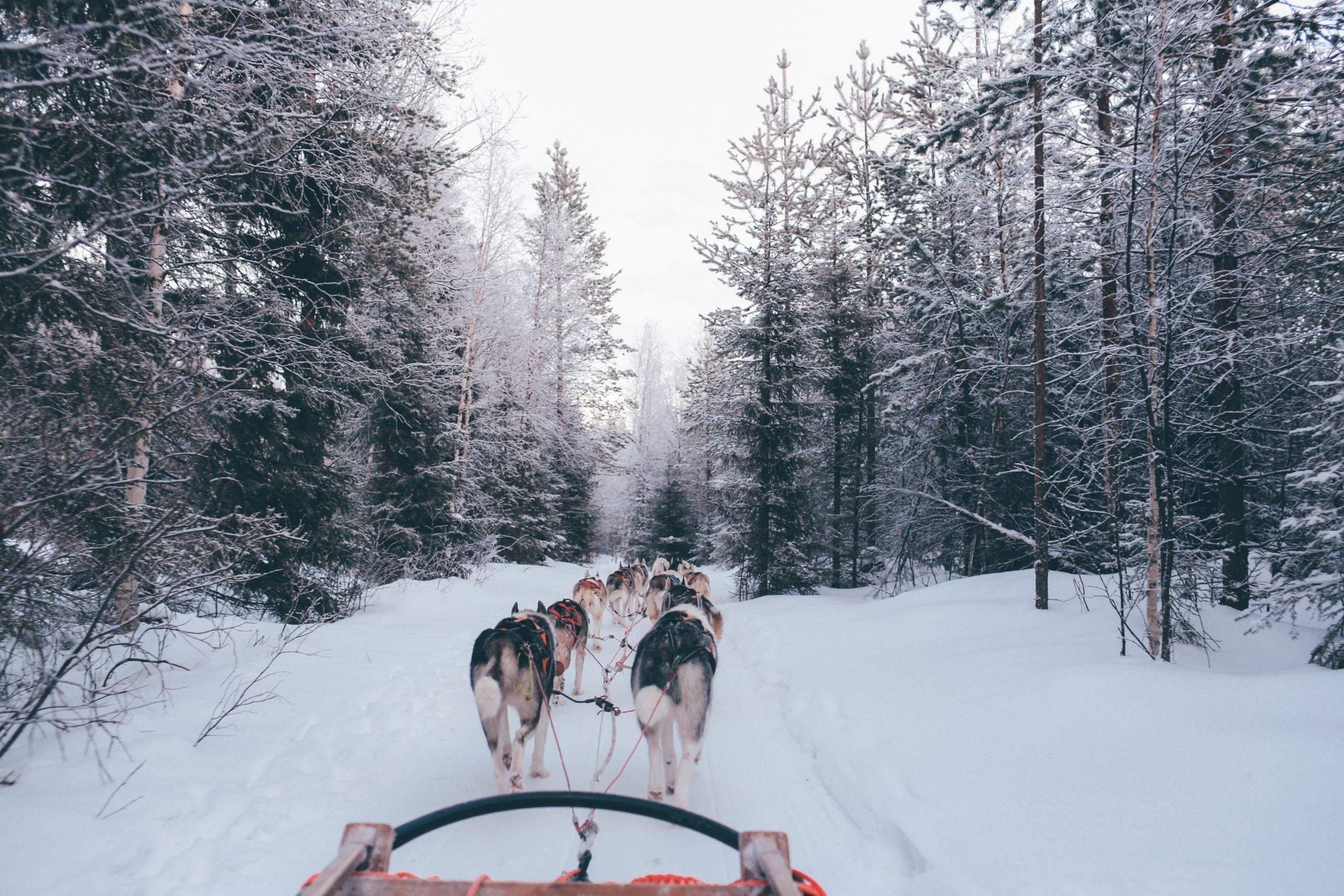 dog sledding courchevel