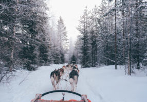 Dog Sledging Courchevel