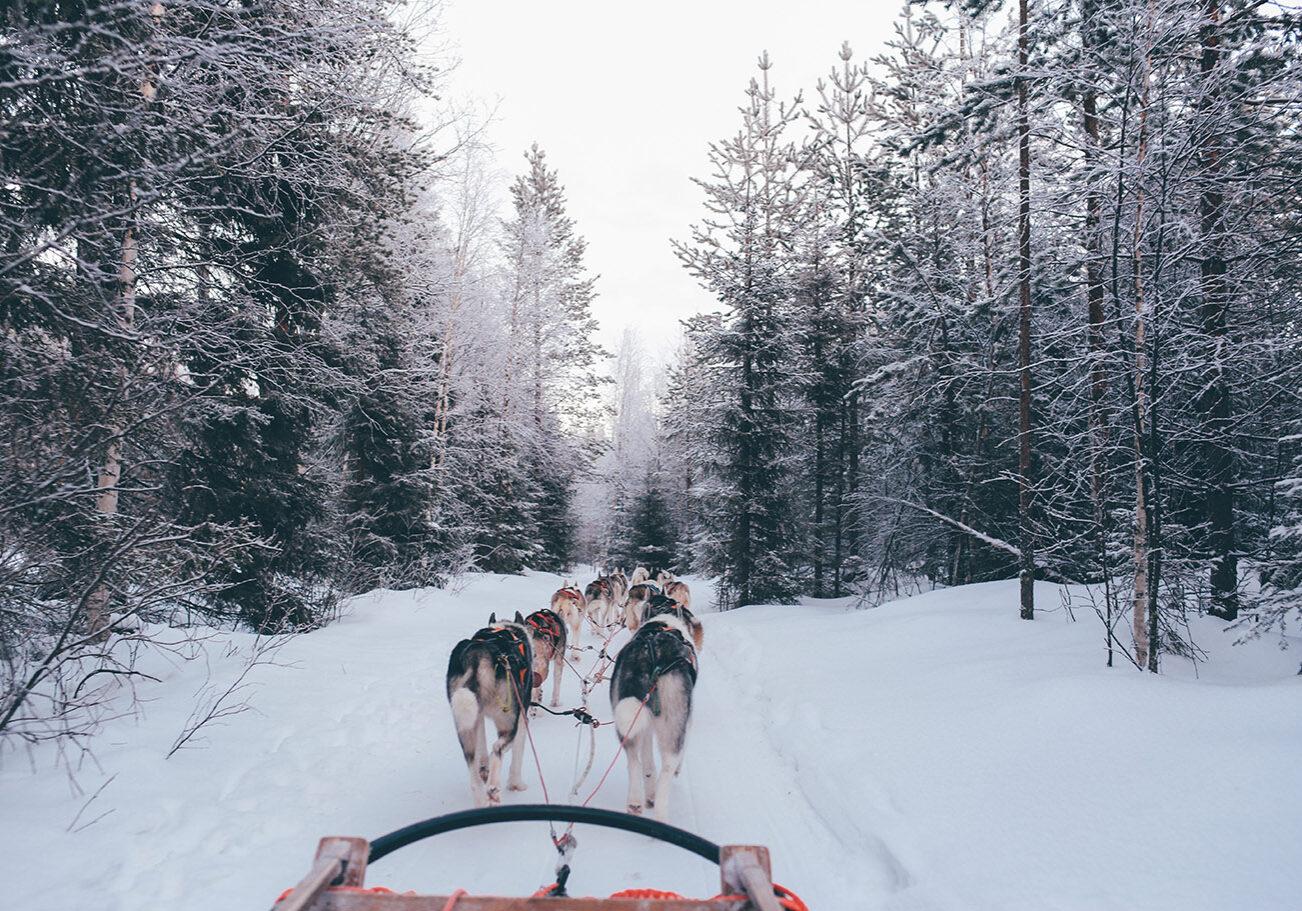 Dog Sledging Courchevel